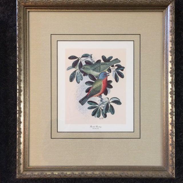 1940s Vintage Earl O Henry Bird Prints - 4 Framed Prints For Sale - Image 5 of 13