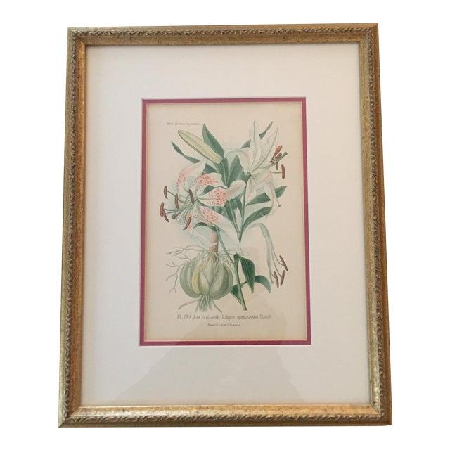 Botanical Prints - Image 1 of 4