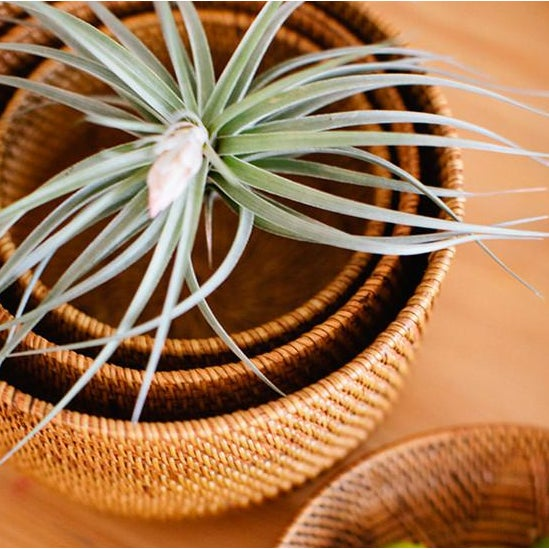 These hand-woven nesting bowls are a super sturdy blend of ate and rattan in a cinnamon color. Hide your clutter or show-...