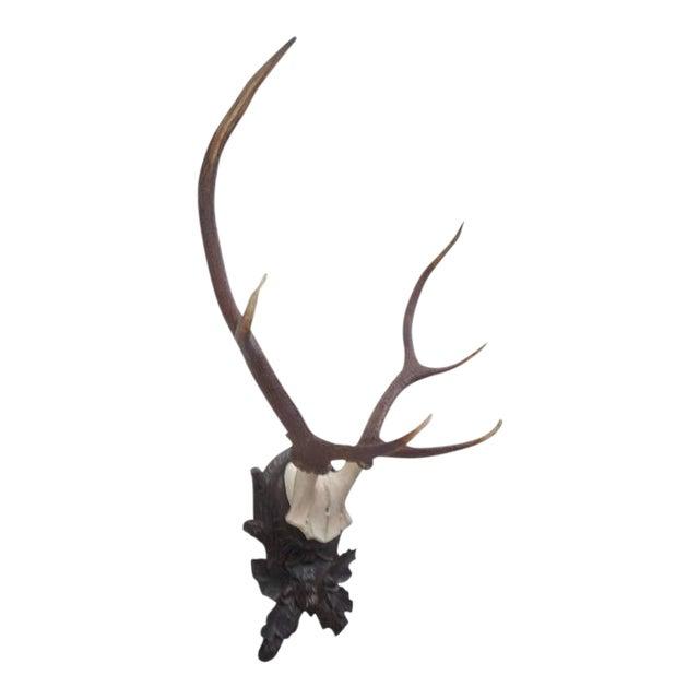 Stately Black Forest Antler Mount on Carved Walnut Plaque For Sale