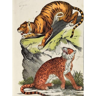 Hand Colored Tiger & Jaguar Woodcut Print For Sale