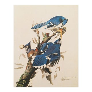 1960s Cottage Style Lithograph of a Blue Jay by Audubon