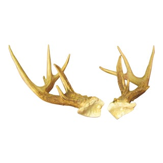 Heavy Large 12 Point Buck Antlers - A Pair