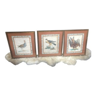 Hand Coloured Bird Theme Italian Engravings C.1790-1820 - Set of 3 For Sale