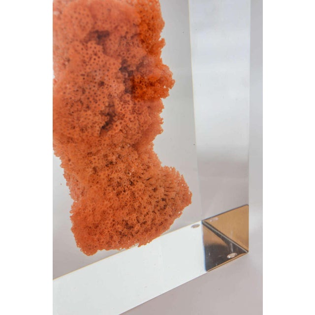 Natural Red Coral in Lucite Block Table Lamps - Sold Indivdually For Sale - Image 11 of 11