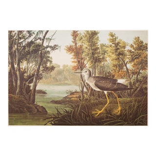 "1960s XL ""Yellow Shank"" Cottage Style Lithograph Print by John James Audubon For Sale"