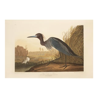 1990s Blue Heron or Crane by Audubon, Large American Classical Print For Sale