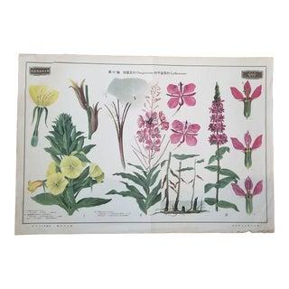 Vintage Botanical Flower School Poster For Sale