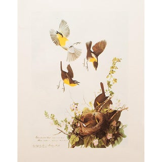 1966 Cottage Lithograph of Yellow-Breasted Chat by John James Audubon For Sale
