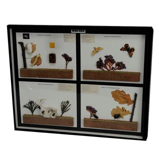 Vintage School Teaching Display Of Usefull Insects For Sale