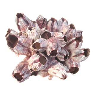 Vintage Mid Century Purple & White Barnacle Cluster For Sale