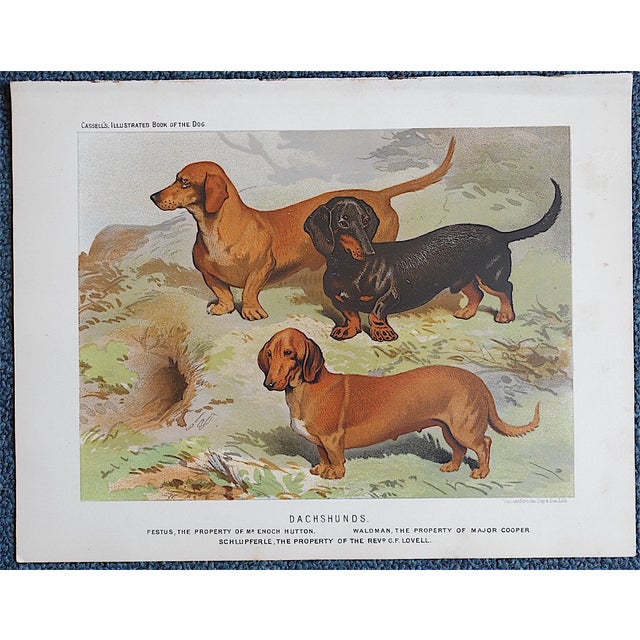 "Antique Dog Lithograph ""Dachshunds"" - Image 2 of 3"