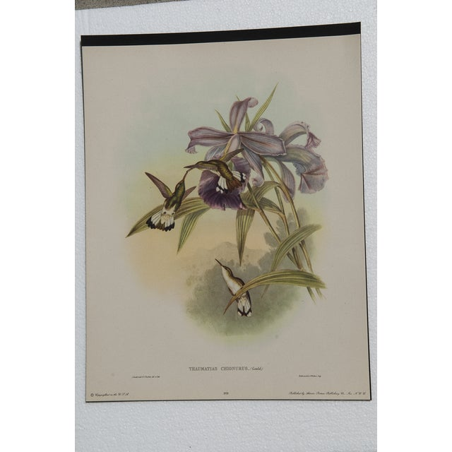Hummingbird Lithograph by John Gould - Image 4 of 7