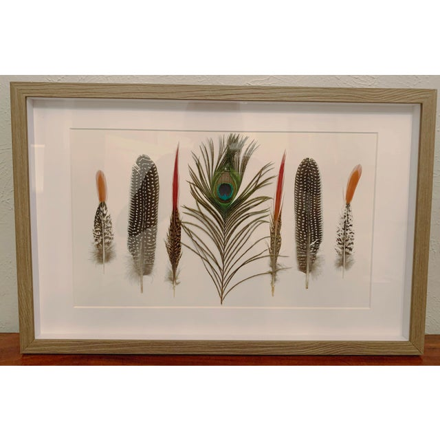 Rustic Seven Feathers Framed Under Glass by Kalalou For Sale - Image 3 of 13