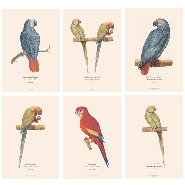 White XL 1590s Contemporary Prints of Anselmus Boëtius De Boodt Parrots - Set of 6 For Sale - Image 8 of 9