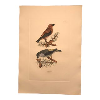 Traditional Cross Bills Hand Colored Copper Engraving by P. John Selby For Sale