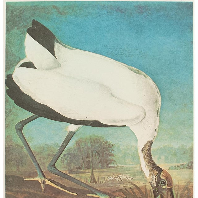 American 1966 Vintage Cottage Print of Wood Ibis by John James Audubon For Sale - Image 3 of 10