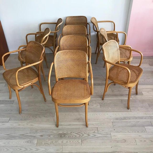 "Mid-Century Josef Hoffmann ""Prague"" 811 Cane & Bentwood Armchairs - Set of 10 - Image 11 of 11"