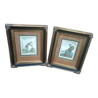 19th Century Antique Monkey Engraving Prints - A Pair For Sale