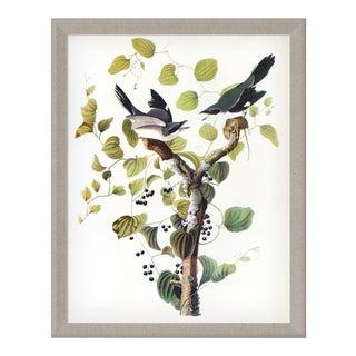 Audubon 2, Framed Artwork For Sale