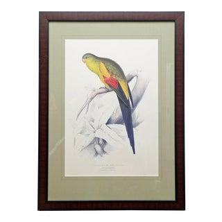 Framed Vintage Reproduction of Edward Lear's Black-Tailed Parakeet For Sale