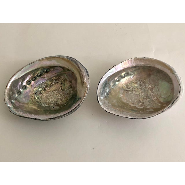 A superior pair of vintage Black Abalone shells which have not been legal to collect for years. These are exceptional in...