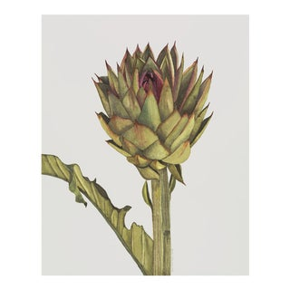 Contemporary Light Grey Cynara Scolymus Watercolor Print