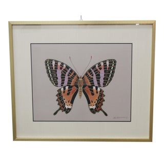 Vintage Framed Butterfly Painting For Sale