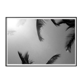 """Palm Frames #3"" Unframed Photographic Print For Sale"