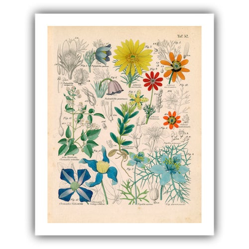 Antique 'Botanical Plate' Archival Print For Sale - Image 4 of 4