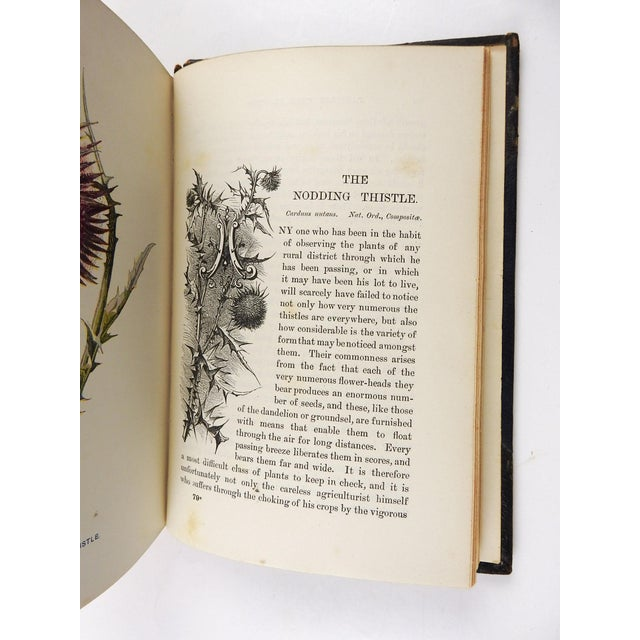 Familiar Wild Flowers 1902 - 2 Volumes For Sale - Image 10 of 11
