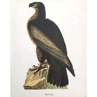 Authentic John James Audubon Vintage Bald Eagle Bird & Botanical Print For Sale