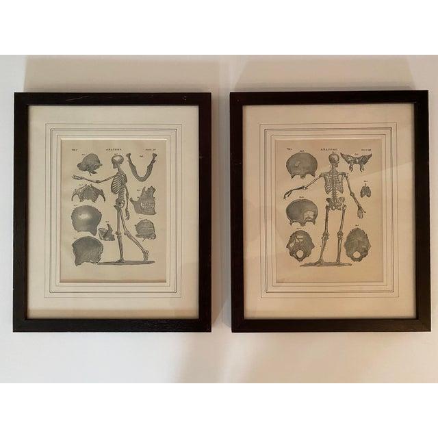 Wood 1890 Original Skeleton Anatomy Illustrations - Set of 2 For Sale - Image 7 of 7