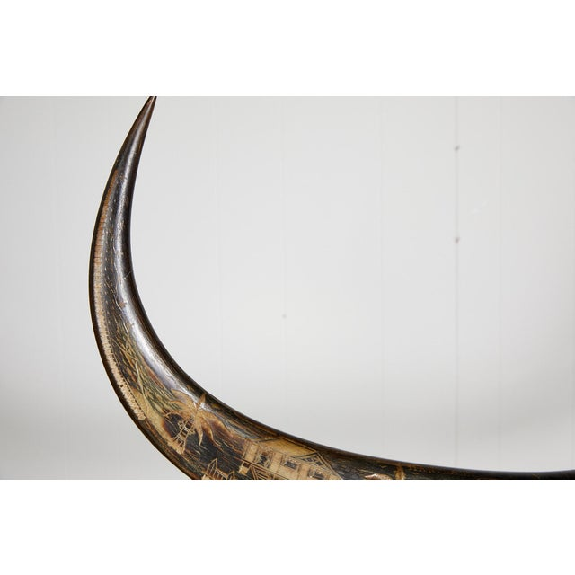 Vintage Brass Mounted Carved Water Buffalo Horns For Sale - Image 9 of 13