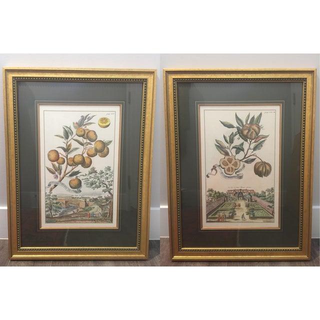 1990s Antique Botanical / Garden Framed Prints by J. Pocker & Son - Set of 2 For Sale - Image 5 of 5