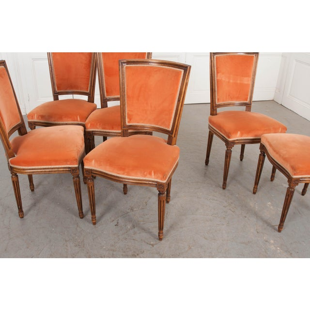 French 19th Century Louis XVI-Style Walnut Sidechairs-Set of 6 For Sale - Image 11 of 12