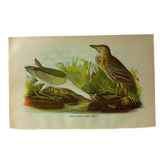 "Vintage Birds of Water Color Print, ""Black-Crowned Night Heron"", Circa 1930 For Sale"