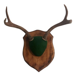 English Style Mounted Antlers on Shield For Sale