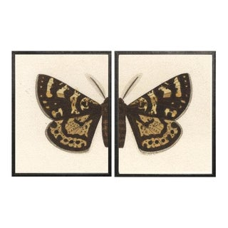 "Split Black and Brown Butterfly - 46"" X 25"" For Sale"