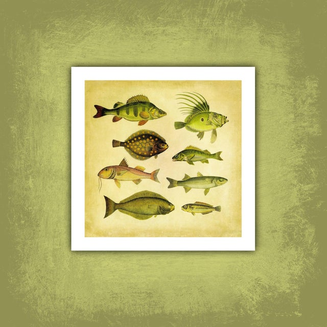 Vintage '8 Green Fish' Archival Print For Sale - Image 4 of 4