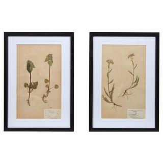 Framed Herbarium I - A Pair