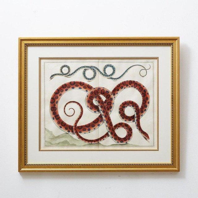 Set of Four Albertus Seba Hand-Colored Snake Prints For Sale - Image 4 of 13