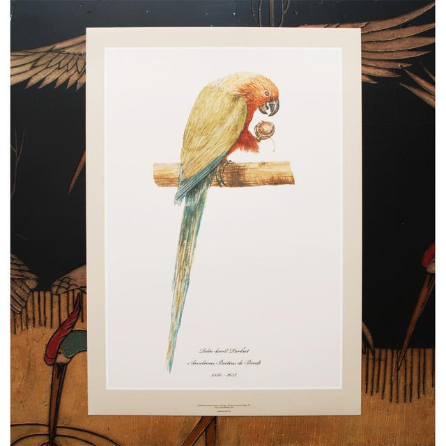 2010s XL 1590s Contemporary Prints of Anselmus Boëtius De Boodt Parrots - Set of 6 For Sale - Image 5 of 9