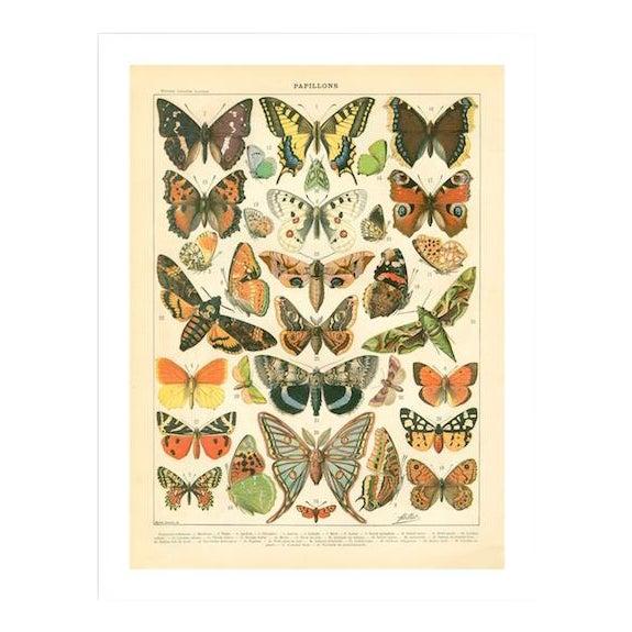 Vintage Papillons Archival Print For Sale