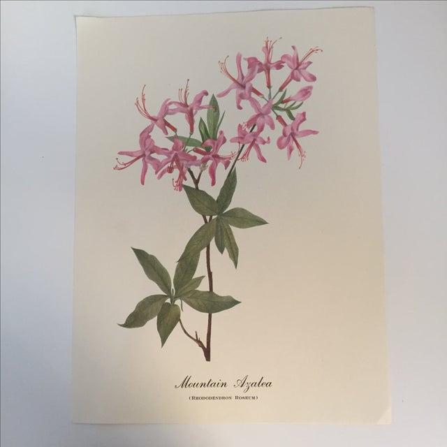 Mountain Azalea Botanical Print - Image 2 of 4