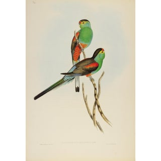 John Gould Print, Parakeet Plate 34 - Hill House Ed. For Sale