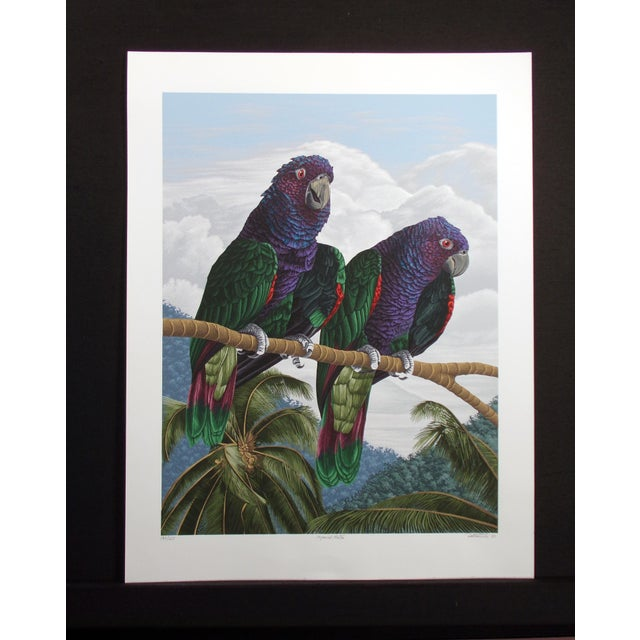 """Realism Dallas John """"Imperial Mates"""" Birds Parrots Signed Numbered Serigraph Art Print Unframed For Sale - Image 3 of 5"""