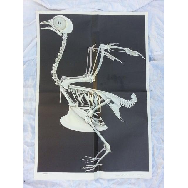 Vintage Anatomy Science Poster - Bird Skeleton - Image 2 of 5