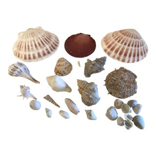 Natural Coastal Sea Shells - Set of 25