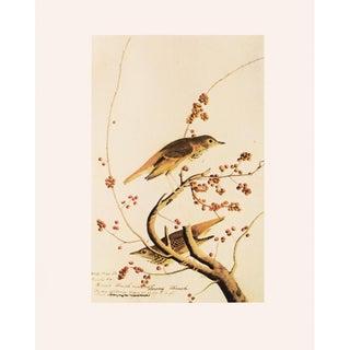 "1966 Audubon ""Hermit Thrush"" Vintage Cottage Style Print For Sale"